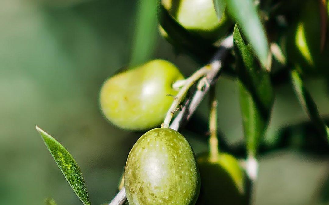 El protagonismo del aceite de oliva en la Subbética