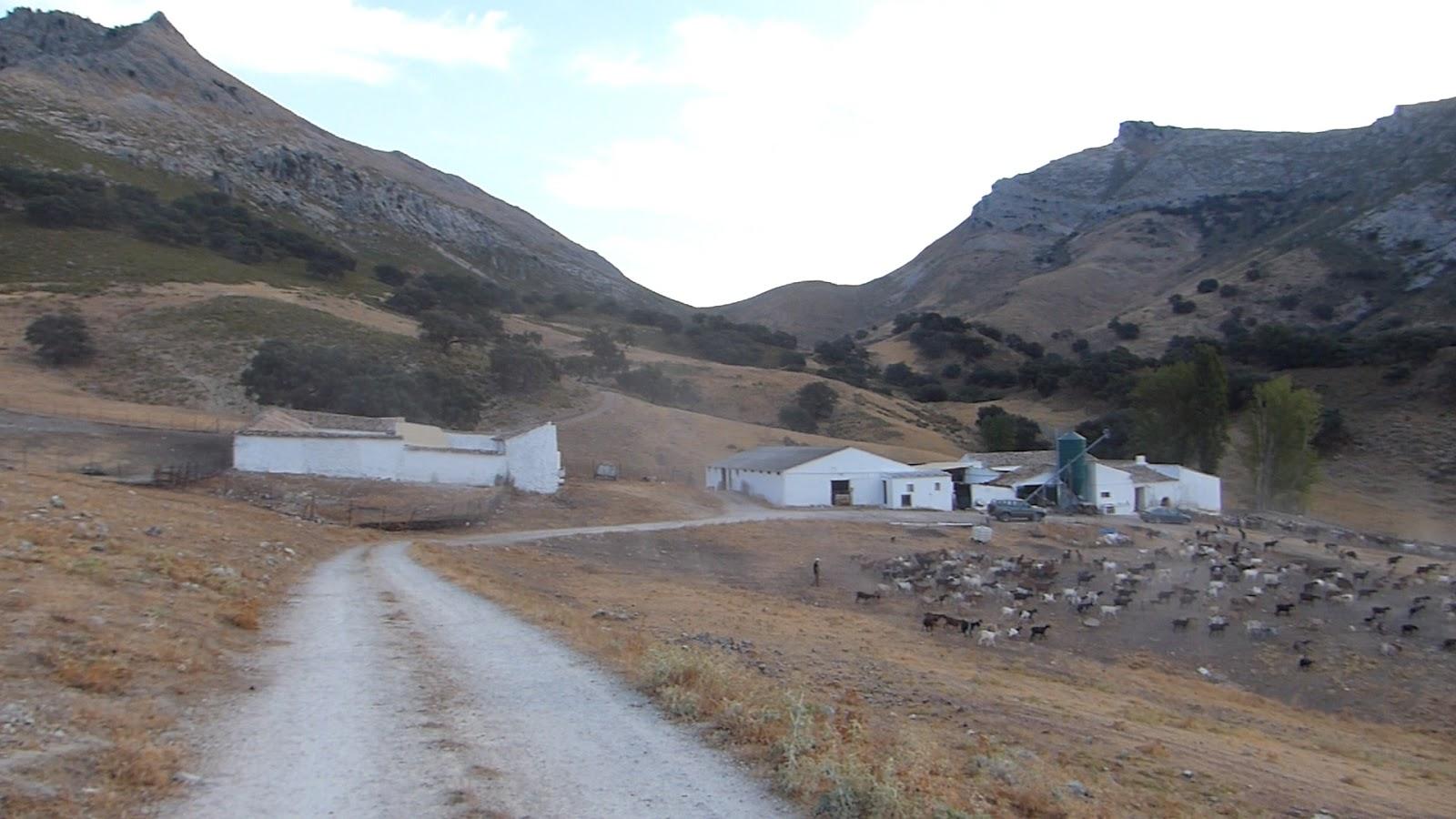Cortijo Alto de Torres