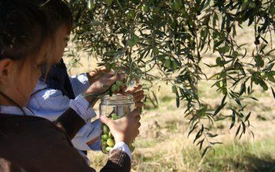 La interesante fusión de agricultura y turismo en la Subbética